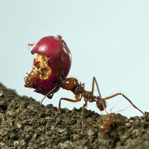 Ant Control Exterminators