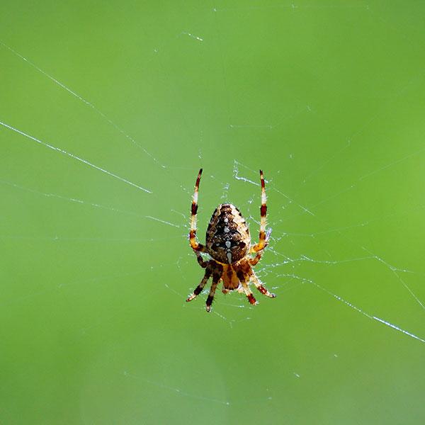 Spider Control Extermination